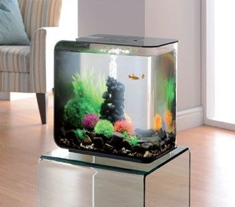 1000 Images About Animals Fish Homes On Pinterest
