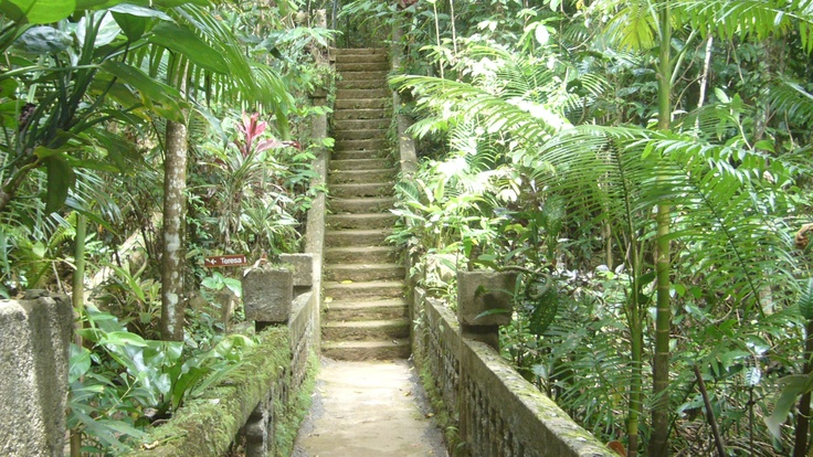 The Stairs at Paronella Park.