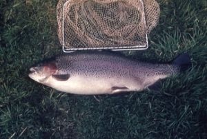 65 best Homesteading-fish images on Pinterest | Aquaponics ...