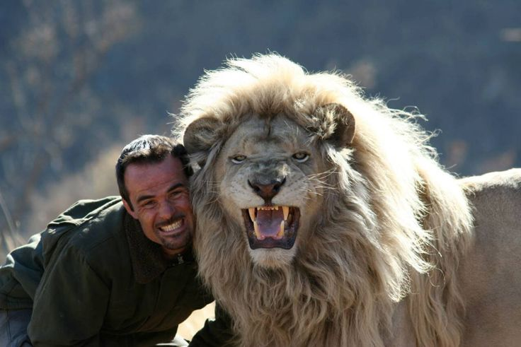 Kevin Richardson, a.k.a. the Lion Whisperer, roars with one of his lions at the Kingdom of the White Lion Park in South Africa