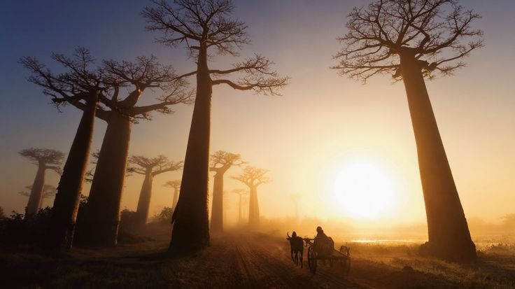 5 Reasons You Have To Travel To Madagascar! in Africa, Madagascar - Travel - Hand Luggage Only