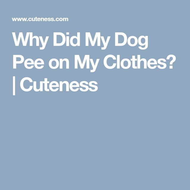 Why Did My Dog Pee on My Clothes? | Cuteness