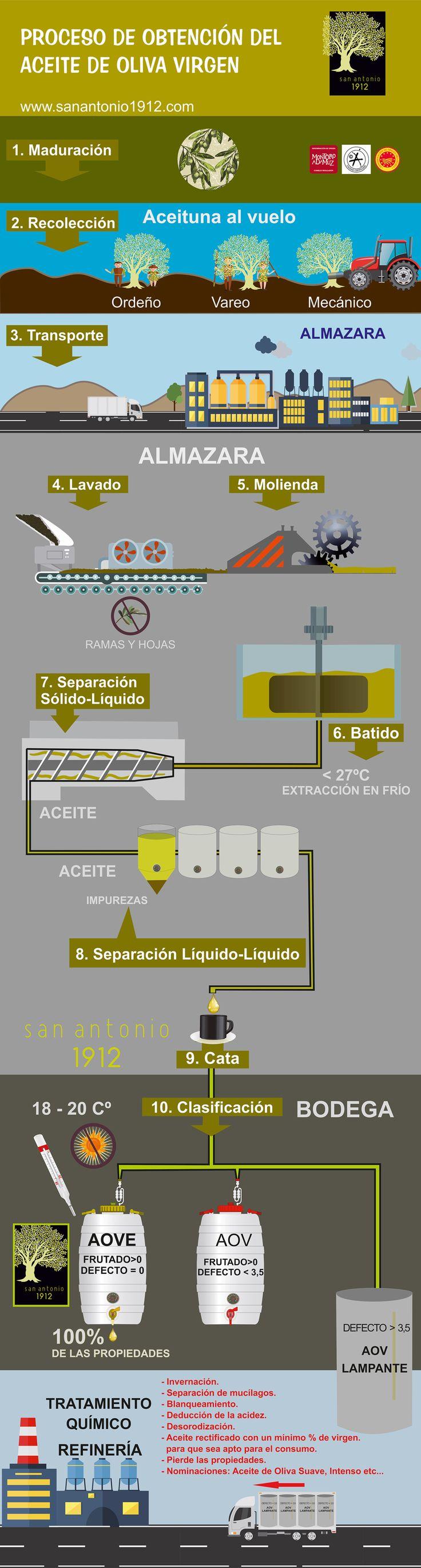 Infografía del Proceso del Aceite de Oliva Virgen