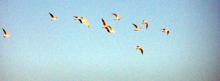 aflockofseagulls.jpg (850×315)