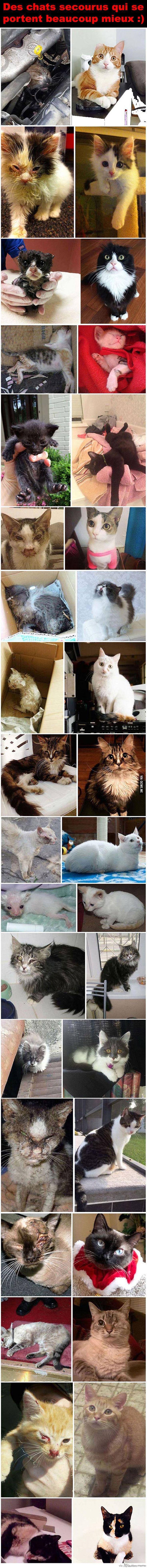 Des chats avant et après avoir été sauvés