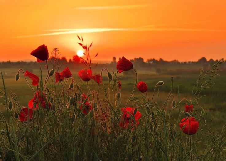 puesta de sol rojo wallpaper