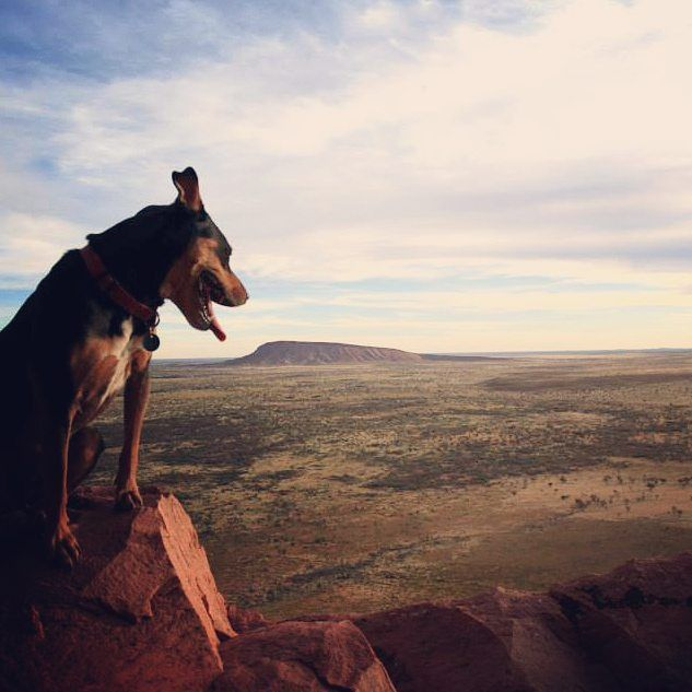 The great expanse of the Warlpiri desert below and the ever faithful companion…
