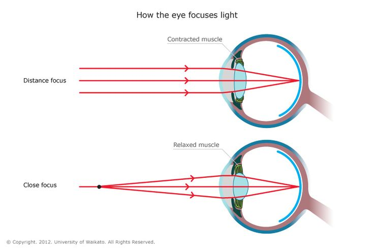 INFO SHEET - How the eye focuses light –  To see clear images, the eye focuses light onto the retina. The cornea and the crystalline lens are both important parts of this process.
