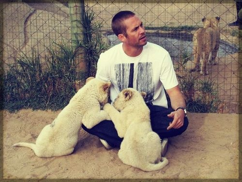 Paul Walker. Omg! I am more in love with him now! Yesterday, I didn't think that's possible.