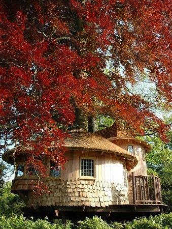5 consigli essenziali per costruire la perfetta casa sull'albero #treehouse #casasualbero #architettura
