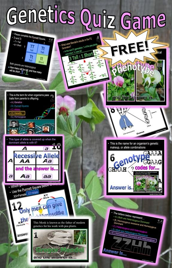 This is a FREE 200 Slide PowerPoint Quiz Game about Mendelian Genetics. Answers in this review game are Gregor Mendel, Heredity, Purebreds, Mendels F1 Results, Phenotype, Genotype, DNA, RNA, Proteins, Genes, Dominant Allele, Recessive Allele, Punnett Square, Probability, Homozygous, Heterozygous, Reproduction, Dihybrid Cross, Codominance, Incomplete Dominance. Worksheet for Answers included.