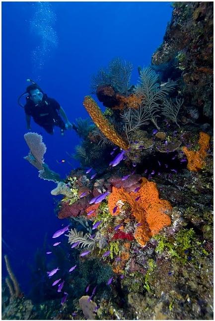Scuba diving in Belize - 2014?