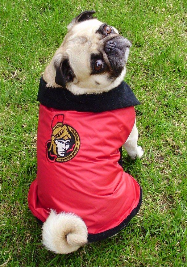 Ottawa Senators Pug Fan