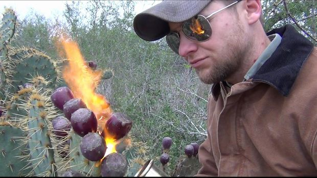 How to Pick and Eat Prickly Pear Cactus Fruit - great tip for getting rid of the spines!