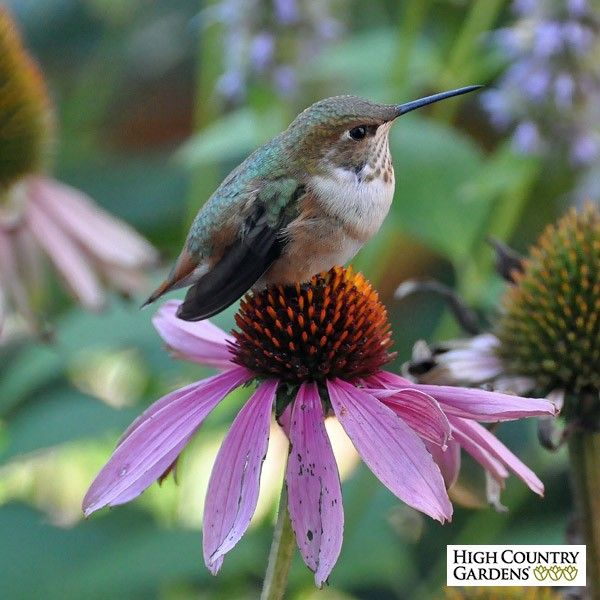 these beautiful summer blooming perennials are full of nectar for our bees hummingbirds and butterflies garden design of 8 plants will
