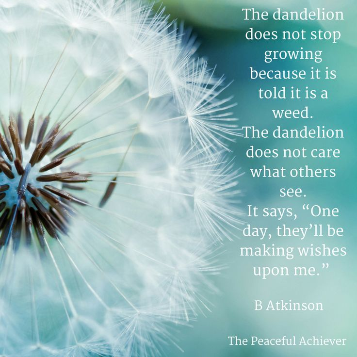 "Wisdom Quote ~ The dandelion does not stop growing because it is told it is a weed. The dandelion does not care what others see. It says, ""One day, they'll be making wishes upon me."" B Atkinson"