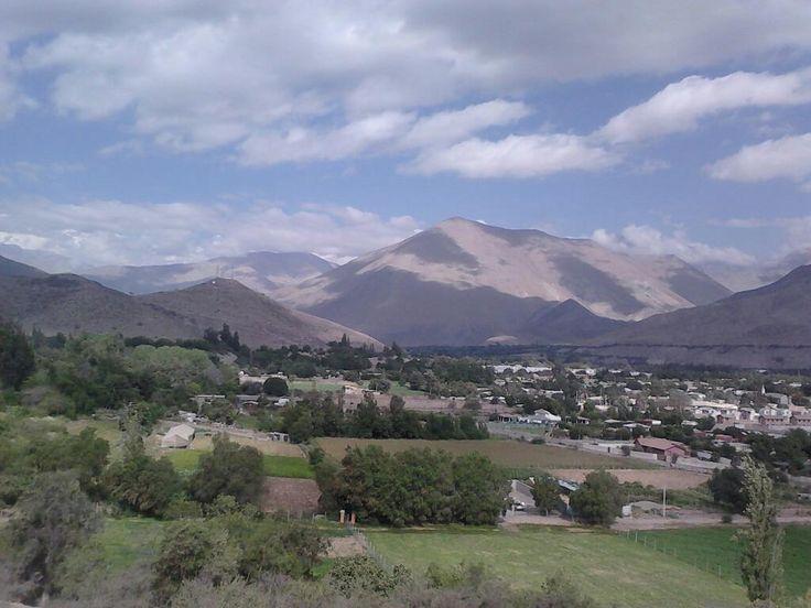 Vicuña. Foto de Mauricio González Cortés.