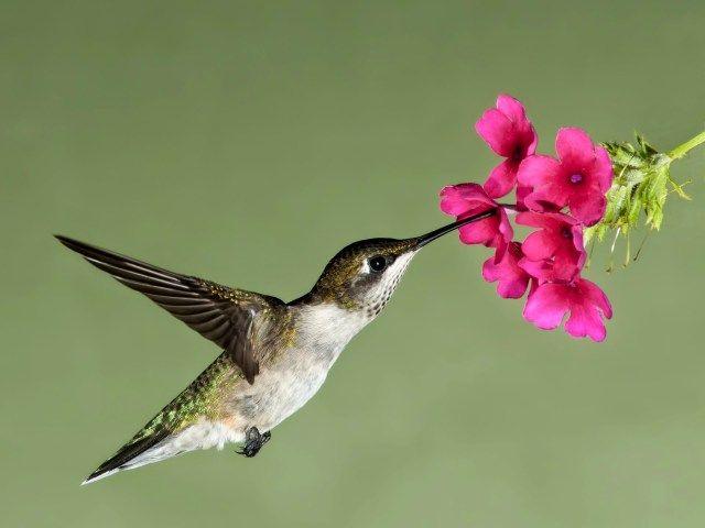 Imagenes de colibries con flores