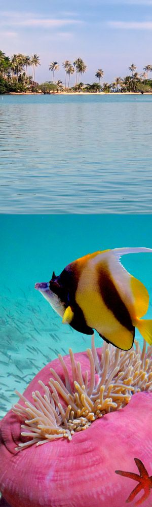 Cancun underwater, a glimpse of the island beach & peek under the ocean at the tropical fish.
