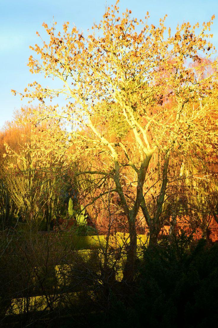 Nature in sunlight