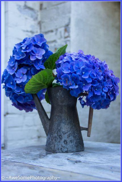 Koude kleuren: blauwe, groene en paarse kleuren worden als koude kleuren beschouwd.