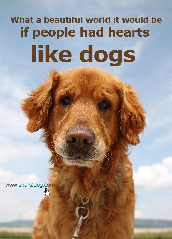 Dog Quotes Beautiful. QuotesGram