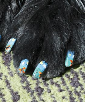 Paws Before You Polish: Doggy Nail Art Is A ThingNails Art, Dogs Nails, Doggie Nails, Things Dogs, Doggie Paw, Puppies Paw, Nail Art, Paw Art, Paw Nails