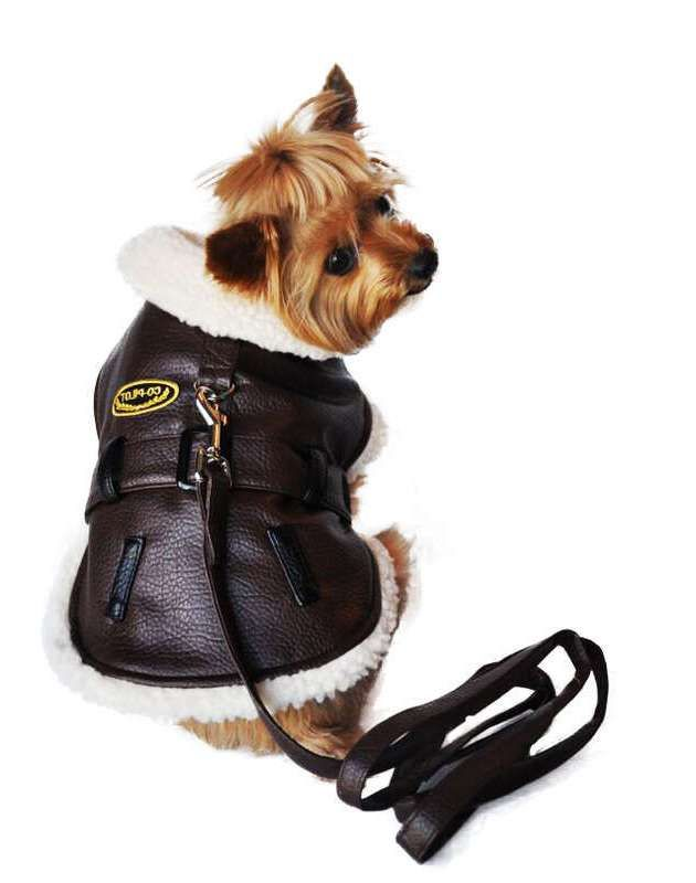 awesome Large Breed Dog Apparel