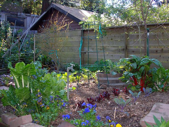 "How to be a suburban homesteader: A great blog post on learning to live with what you have, even when you dream of having a ""real"" homestead some day."