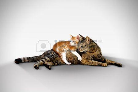Gatti - madre Gatto e cucciolo