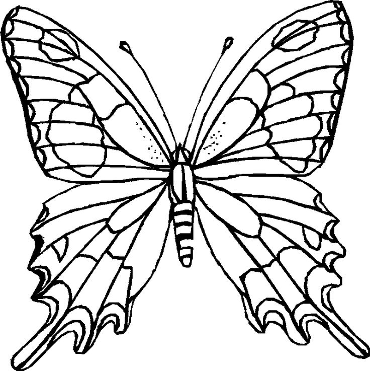 Realistic Butterfly Coloring Page | Butterfly Coloring Printables for Kids
