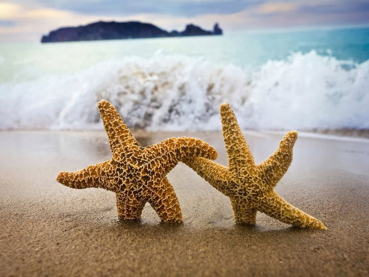 :)Life, Friends, The Ocean, Starfish,  Sea Stars, At The Beach, Summer, Dance, Holding Hands