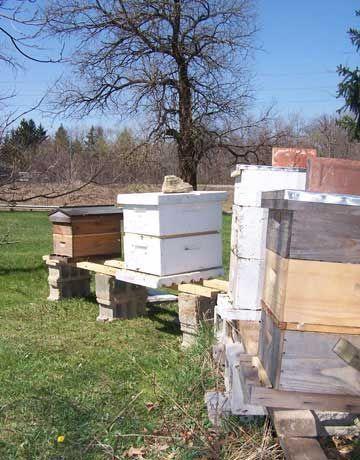 raising bees backyard beekeeping bee hives bee keeping honey bees