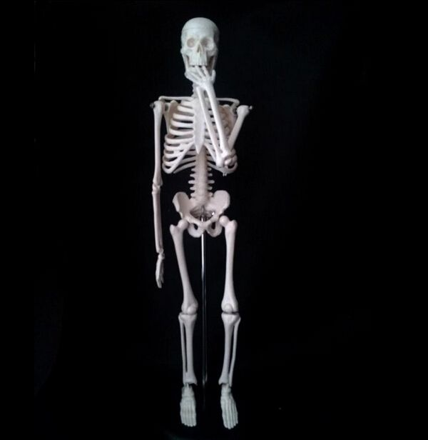 (26.91$)  Buy here  - 45cm human skeleton model Removable human skeleton model skeleton anatomical model solution