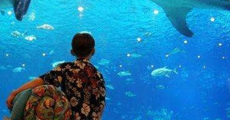 The Best Aquariums in the US