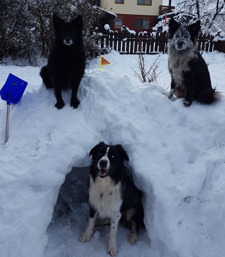 Hunde Foto: Alexandra und Kiki & King & Kira - Hunde-Iglu 😉❄😍 Hier Dein Bild hochladen: http://ichliebehunde.com/hund-des-tages  #hund #hunde #hundebild #hundebilder #dog #dogs #dogfun  #dogpic #dogpictures