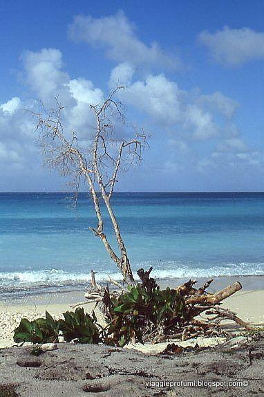 Marie Galante island