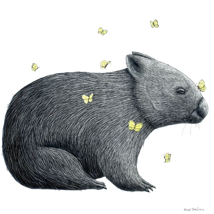 Renee Treml – Mariposa wombat illustration created on scratchboard. Available on fine art paper or eco-friendly wood veneer • Available at thebigdesignmarket.com