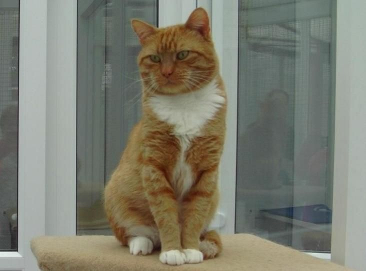 Marmalade Find A Pet Rspca Org Uk Kitten Kittens Cats