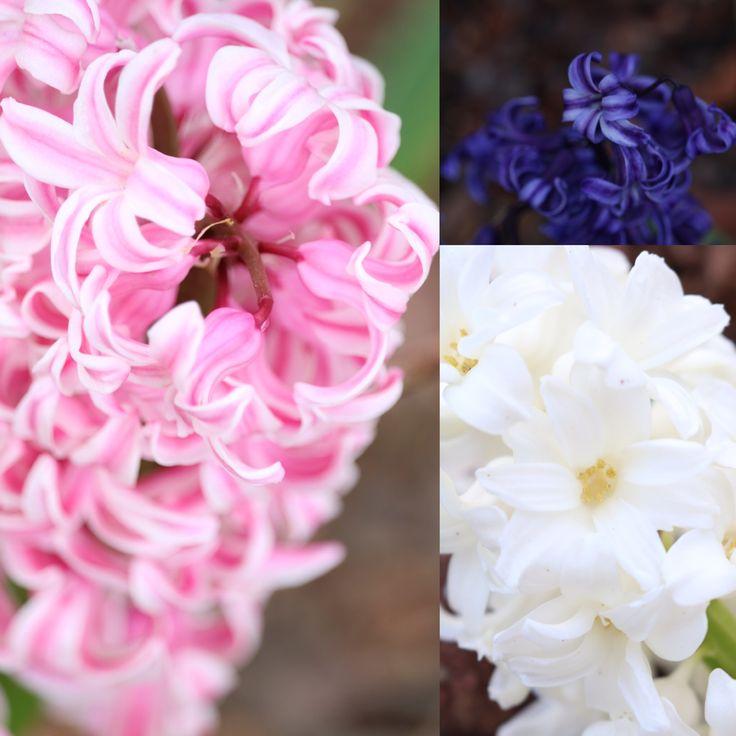 Spring Time 🌸