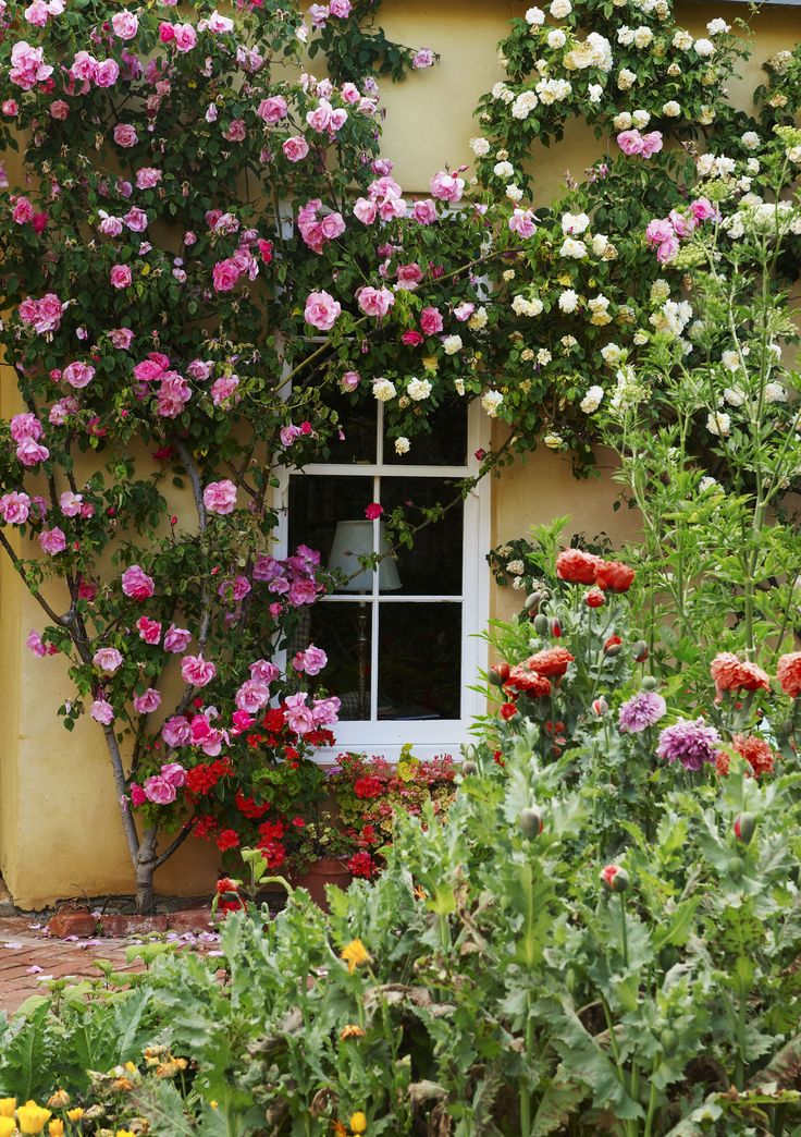 Apricot and vibrant pink coloured roses create a cottage garden feel at Al-Rhu Farm on the outskirts of the Barossa Valley. Photography: Brigid Arnott | Story: Australian House & Garden