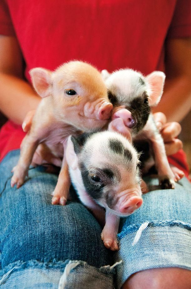 Piglets                                                                                                                                                                                 More