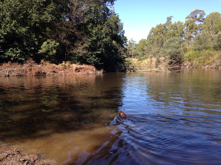 Yarra River, Eltham