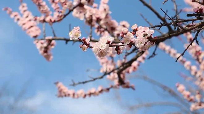 Pin By Shannon Loyet On Randon Blossom Trees Tree Branches Blossom