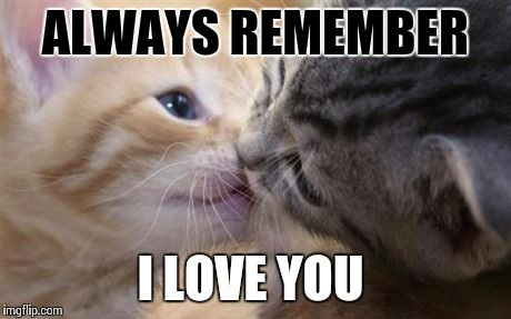 Looking for I love You memes or simply a cute romantic memes for your love mate? Introducing our hand picked collection of the best love memes.