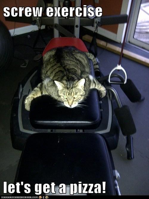 Yep!Random Pictures, Dexter, Funny Animal Pictures, Funny Animal Pics, Funny Cat, Funny Pictures, Pizza, Fat Cats, Kitty