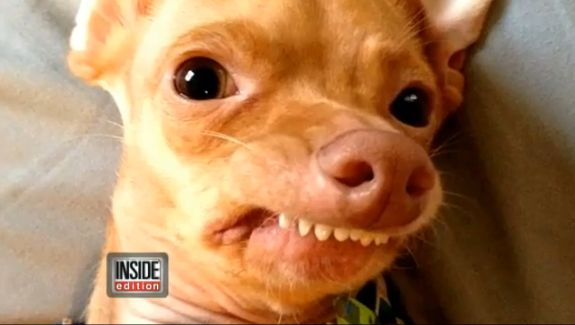 Tuna, Once-Abandoned Dog with Severe Overbite, Turns Into ... - photo#25