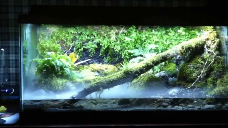 Stunning Waterfall Paludarium: removeable waterfall, rain bar, and fogger. Animals include dart frog, chinese water frog, small fish (white clouds?). gives a quick overview of supplies used. VERY COOL!! :D