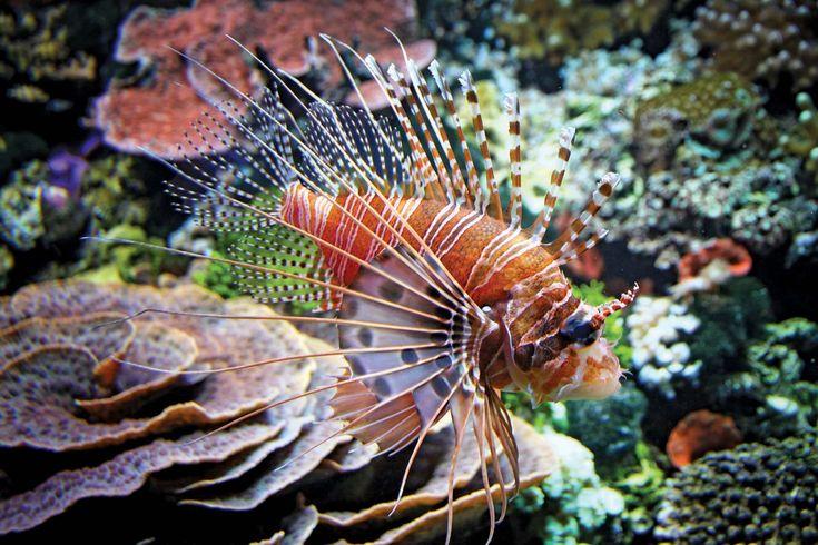 10 of the World's Most Dangerous Fish | Britannica.com