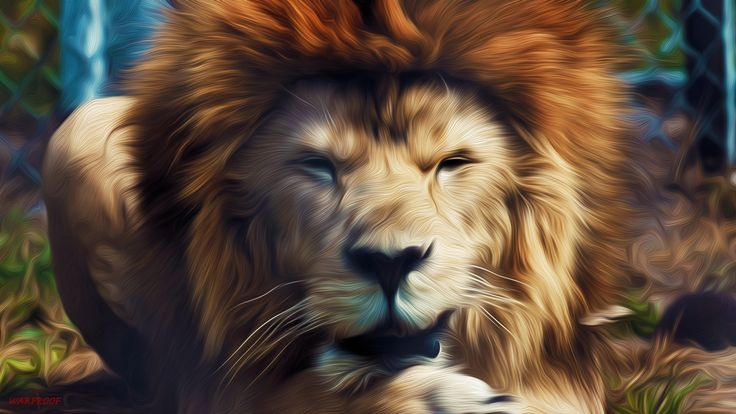 1000 Ideas About Hd Images On Pinterest: 1000+ Ideas About Lion Hd Wallpaper On Pinterest